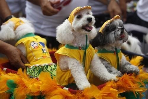 dogs-brazil
