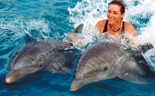 Swim with Dolphins At Marmaris