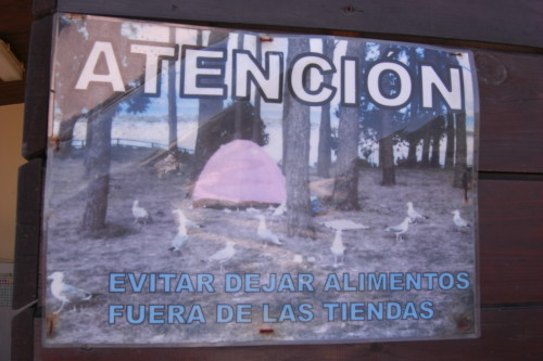 Attention to seagulls