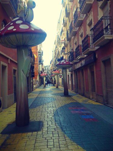 Mushrooms-Alicante