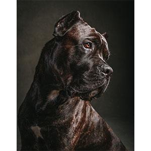 Canine; art; gift; woof; ruff; cute; photography; pup; good boy; boop