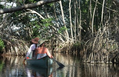 Paddling Everglades and Biscayne National Parks: A Guide to the Best Paddling Adventures (Paddling Series)