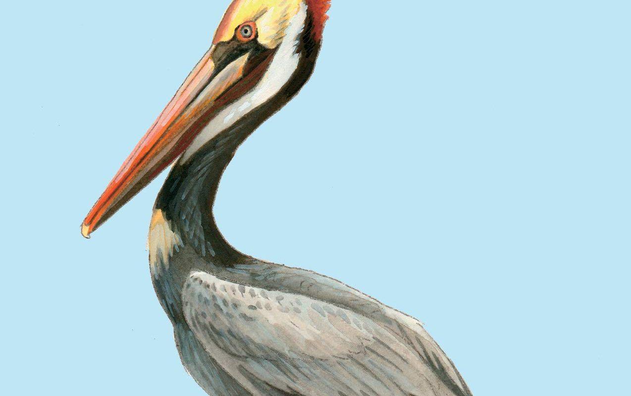 Birds of Florida (Falcon Field Guide Series)